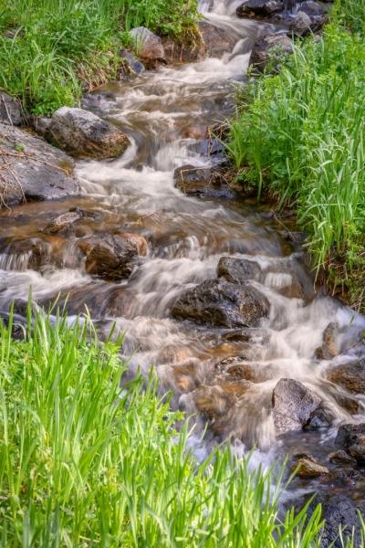 Creek-through-the-Grass_Z6Z2901