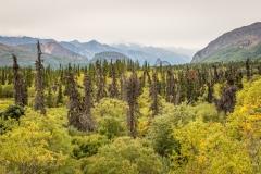 DSC1092 Autumn Landscape near Glenn Highway Alaska