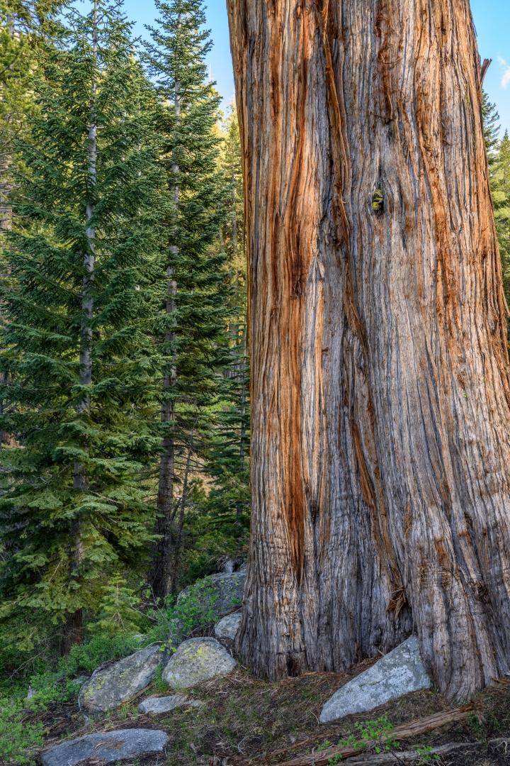Calming-Sierra-Forest-Scene_Z6Z2723