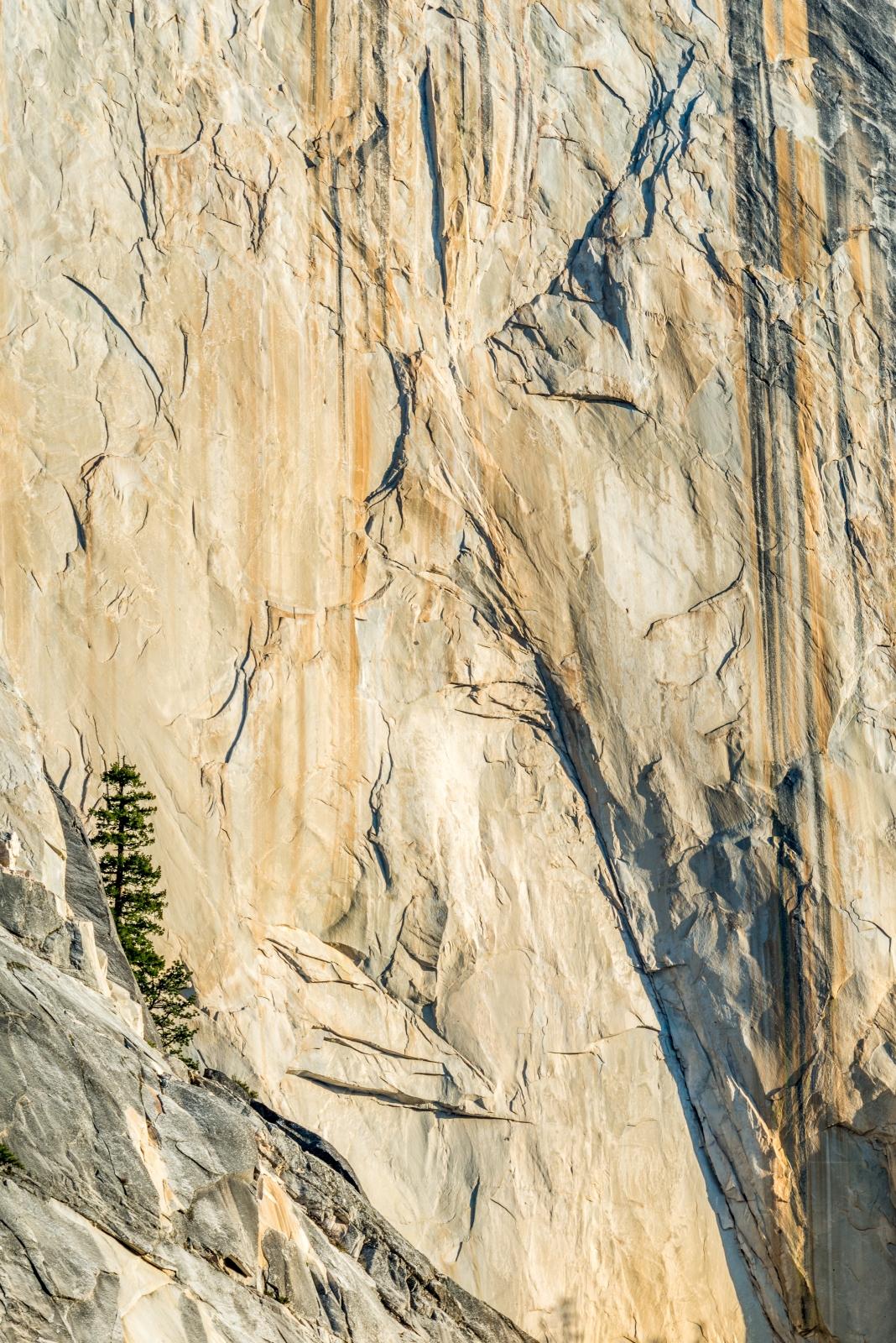 _DSC3054 Lone Tree - Half Dome - Yosemite