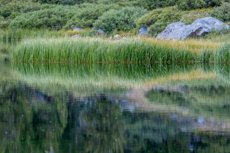 _DSC3950 Grasses  Reflection - John Muir Wilderness