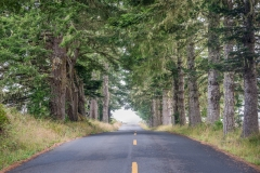 _DSC3524 Mendocino County Tree-Lined Road in Fog