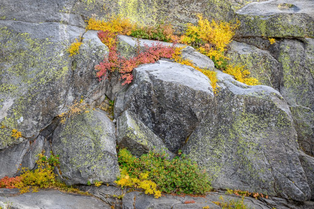 Intimate view of  Autumn Colors on Granite in Yosemite National Park
